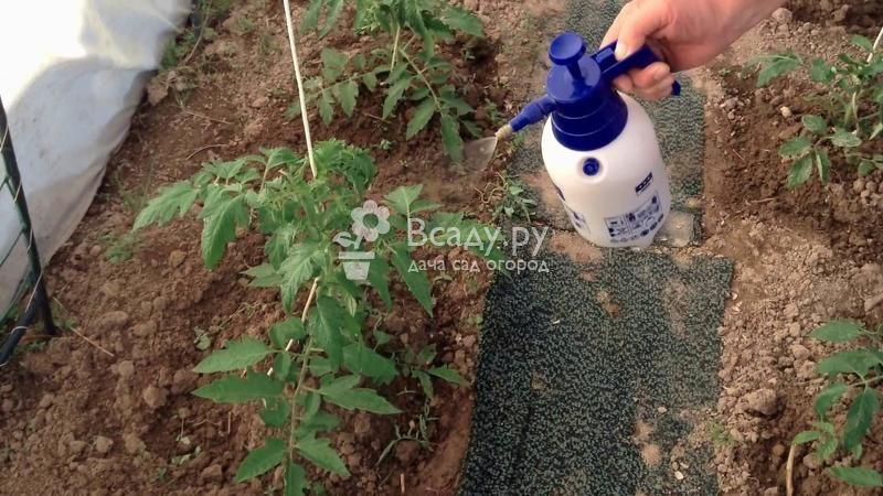 Йод для растений в огороде: удобрение, стимулятор и защита от болезней