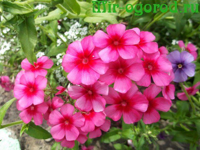 Какие цветы сажать на рассаду в марте
